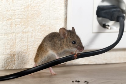 Pest Control in Enfield, EN1. Call Now! 020 8166 9746