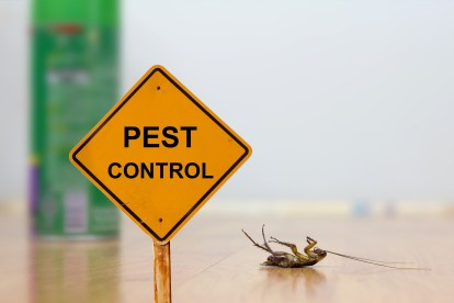 Pest Contol in Enfield, EN1. Call Now 020 8166 9746