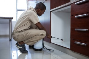 Pest Inspection, Pest Control in Enfield, EN1. Call Now 020 8166 9746